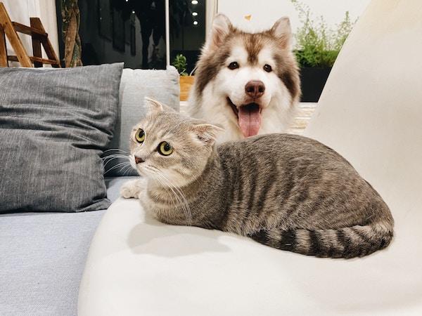 pets on rental furniture_blog